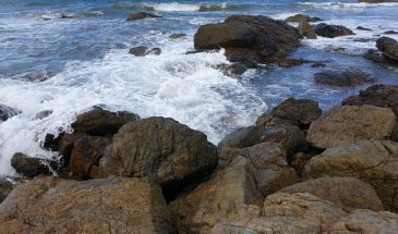 What to do in Port Macquarie with kids